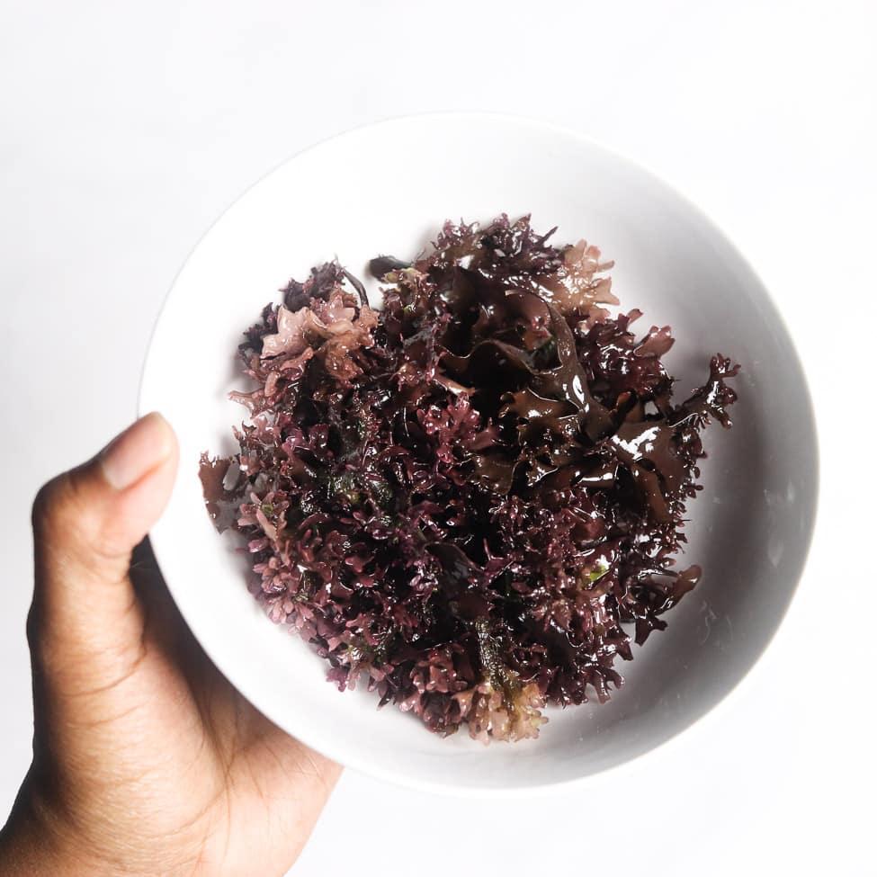 Chondrus Crispus Irish Moss in a white bowl