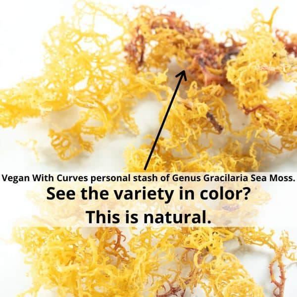 Graphic of gold and red Genus Gracilara sea moss