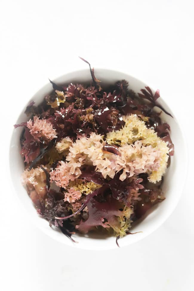hydrated Chondrus Crispus in a white bowl