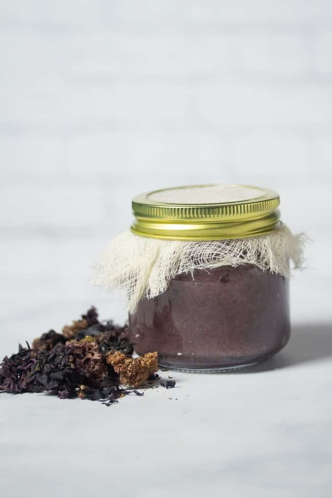 purple sea moss gel in a jar covered with a cheese cloth next to dried Chondrus Crispus